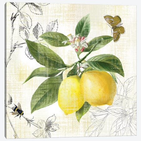 Linen Lemons I Canvas Print #NAN544} by Nan Canvas Wall Art