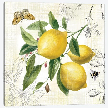 Linen Lemons II Canvas Print #NAN545} by Nan Canvas Art