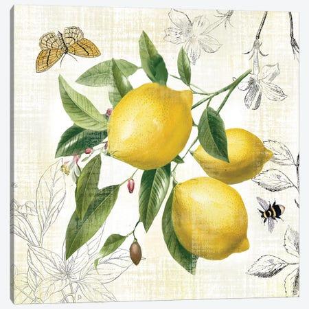 Linen Lemons II Canvas Print #NAN545} by Nan Canvas Art