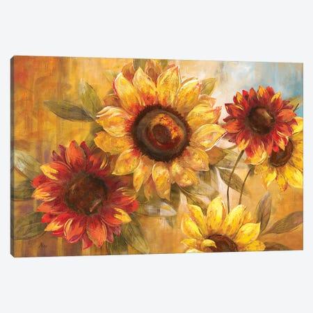 Sunflower Cheer Canvas Print #NAN620} by Nan Canvas Art