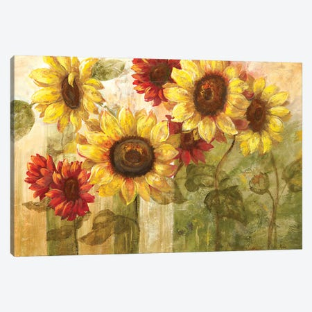 Sunflower's Delight Canvas Print #NAN621} by Nan Canvas Artwork