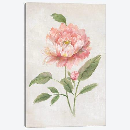 Grandiflora III Canvas Print #NAN654} by Nan Canvas Art