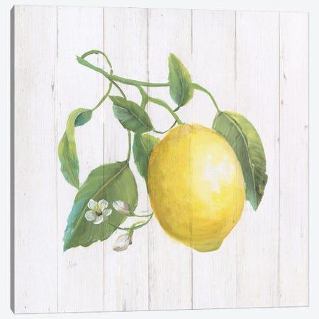 Lemon Fresh I Canvas Print #NAN659} by Nan Canvas Art Print