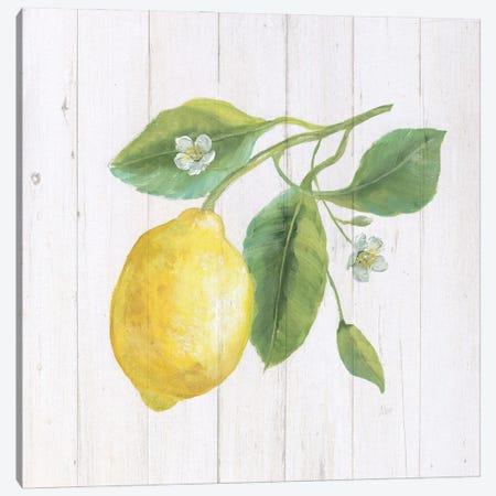Lemon Fresh II Canvas Print #NAN660} by Nan Canvas Artwork