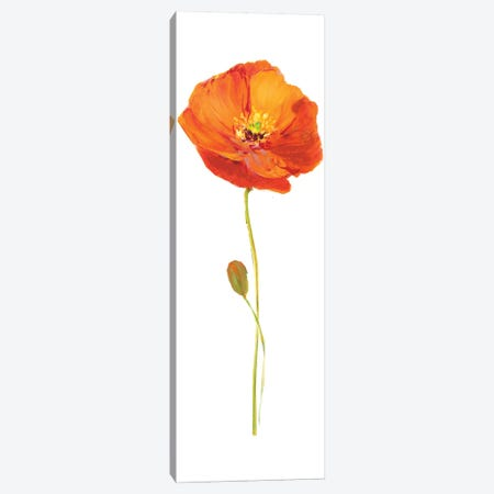 Poppy Pop II Canvas Print #NAN81} by Nan Art Print
