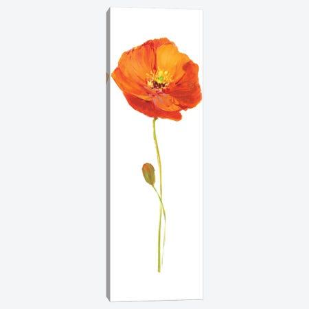 Poppy Pop II Canvas Print #NAN81} by Nan Art Print