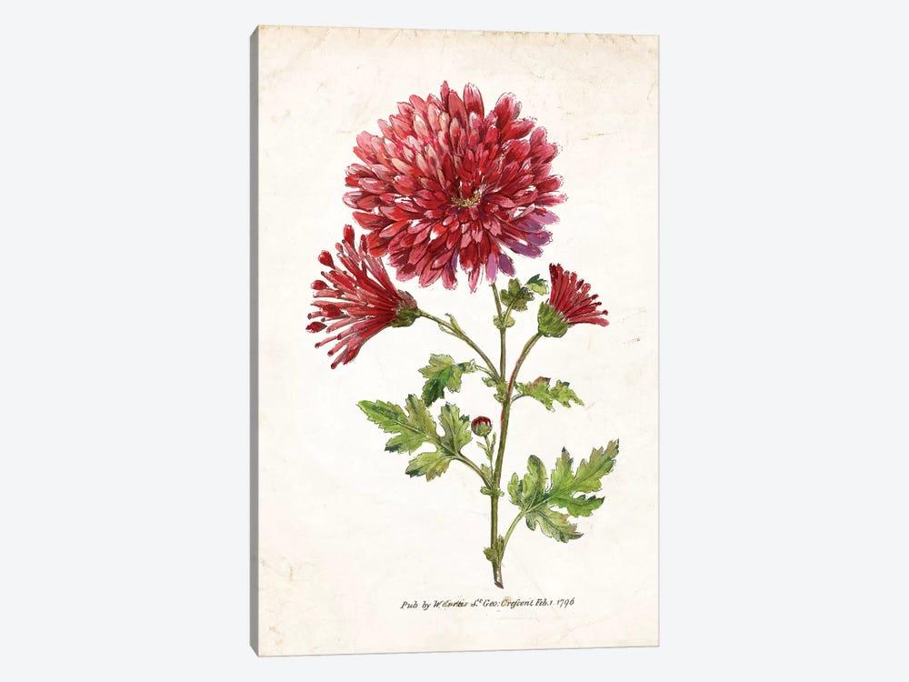 Botanical III by Nan 1-piece Art Print