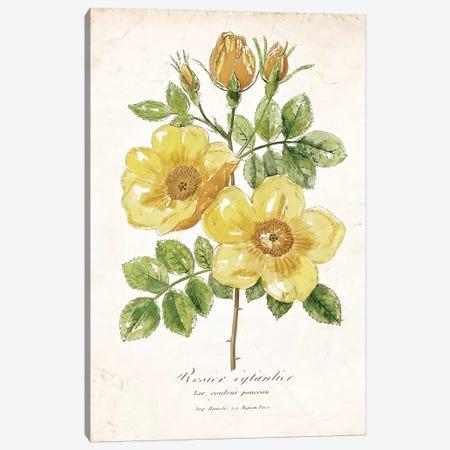 Botanical IV Canvas Print #NAN99} by Nan Canvas Wall Art