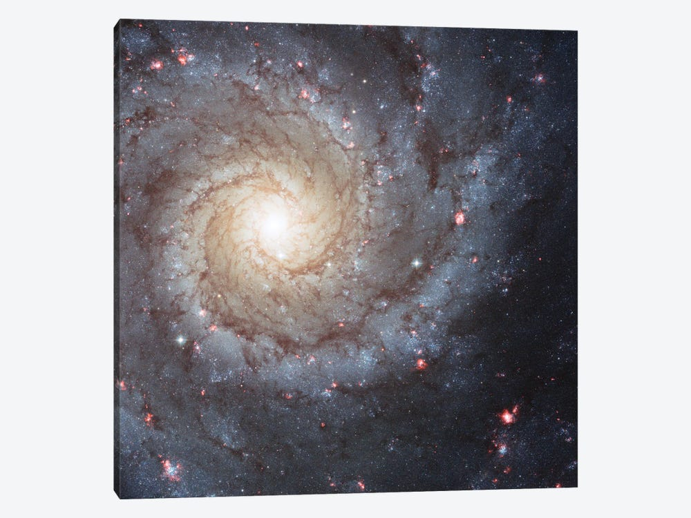 Radiating Hydrogen Clouds, Messier 74 (The Phantom Galaxy) by NASA 1-piece Canvas Art