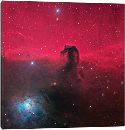 The Magnificent Horse Head Nebula Canvas Art Print