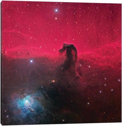 The Magnificent Horse Head Nebula Canvas Art Print