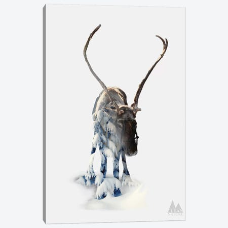 Moose Canvas Print #NAT5} by Clean Nature Canvas Print