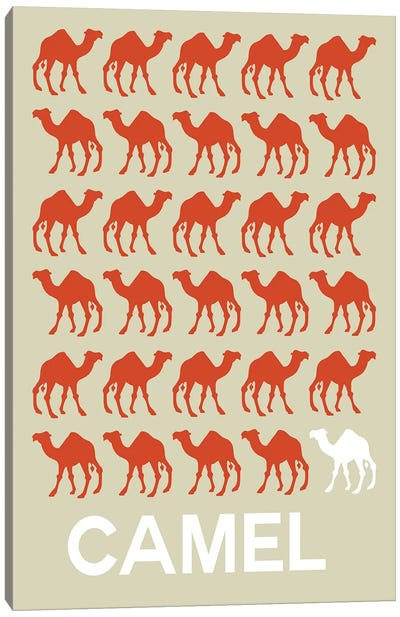 Camel Of Camels Canvas Art Print