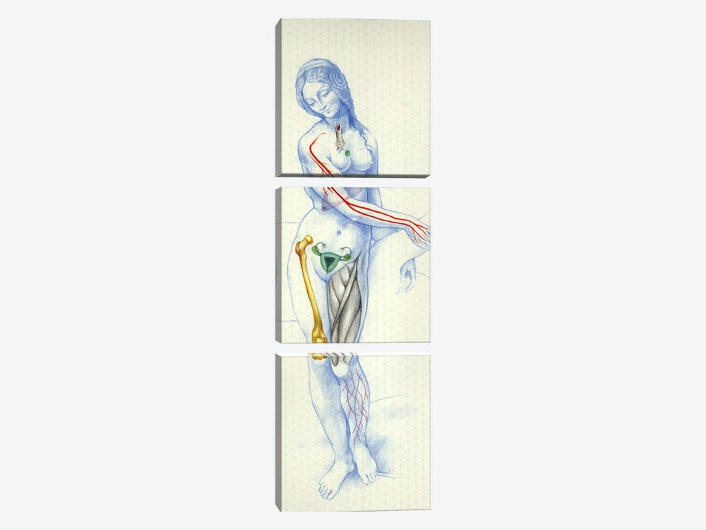 Blue Skeletal by Nick Bantock 3-piece Canvas Wall Art