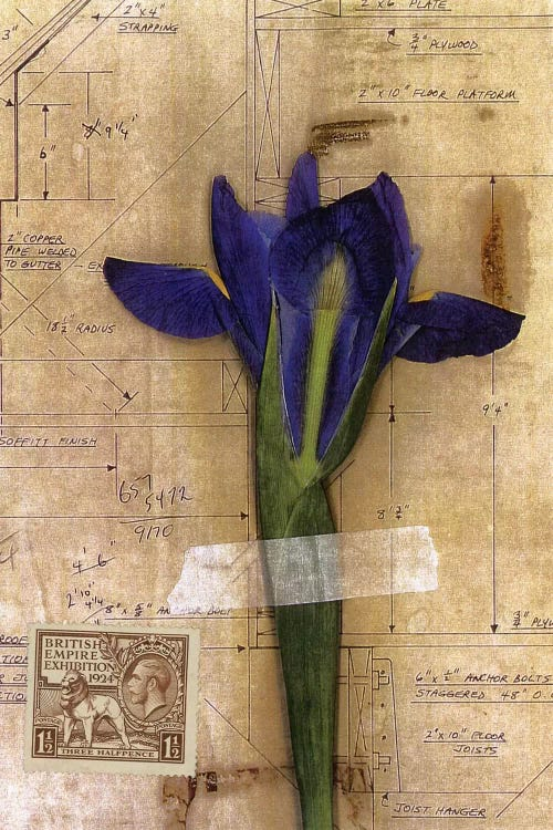 Iris Plan Canvas Art By Nick Bantock Icanvas