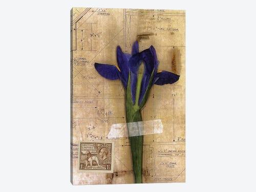 Iris Plan Canvas Art By Nick Bantock Icanvas