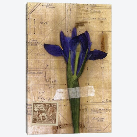 Iris Plan Canvas Print #NBK28} by Nick Bantock Canvas Art
