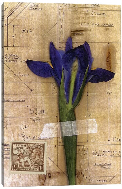 Iris Plan Canvas Art Print