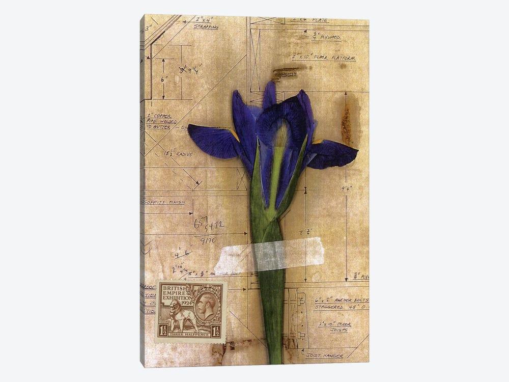 Iris Plan by Nick Bantock 1-piece Canvas Wall Art