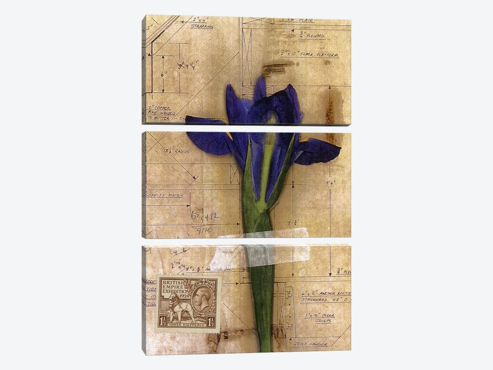 Iris Plan by Nick Bantock 3-piece Canvas Artwork