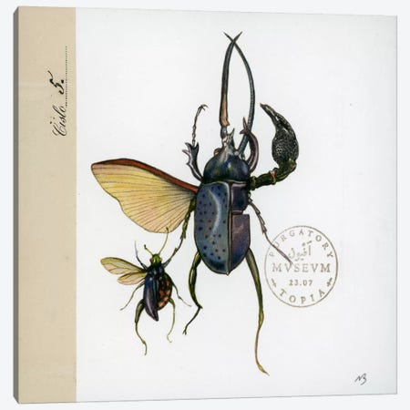 Morph Insects Canvas Print #NBK44} by Nick Bantock Art Print