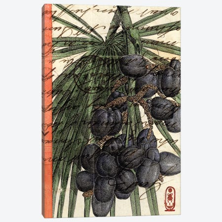 Plums Canvas Print #NBK51} by Nick Bantock Canvas Art Print