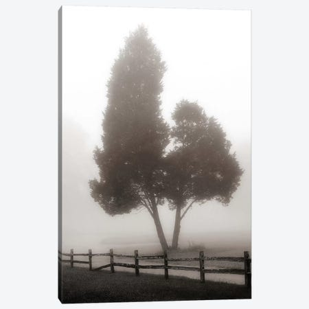 Cedar Tree & Fence Canvas Print #NBP5} by Nicholas Bell Photography Canvas Artwork