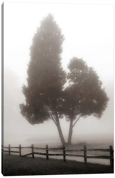Cedar Tree & Fence Canvas Art Print