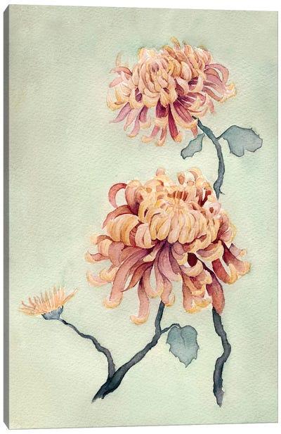 Chrysanthemum Beauty I Canvas Art Print