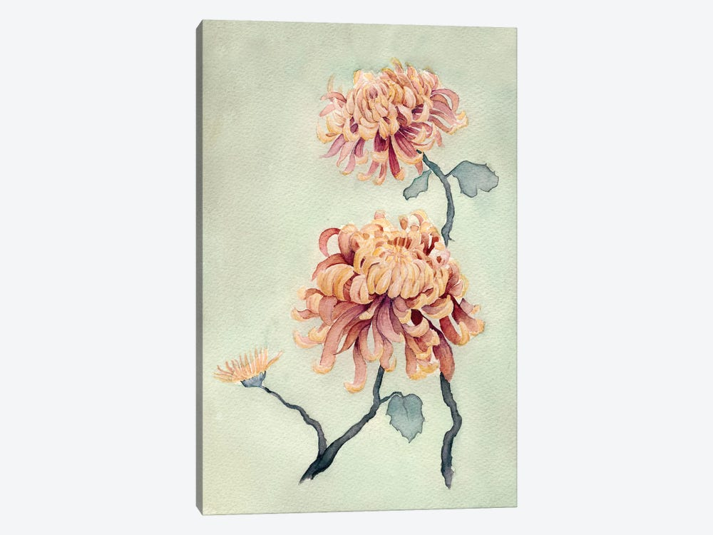 Chrysanthemum Beauty I by Natasha Chabot 1-piece Canvas Print