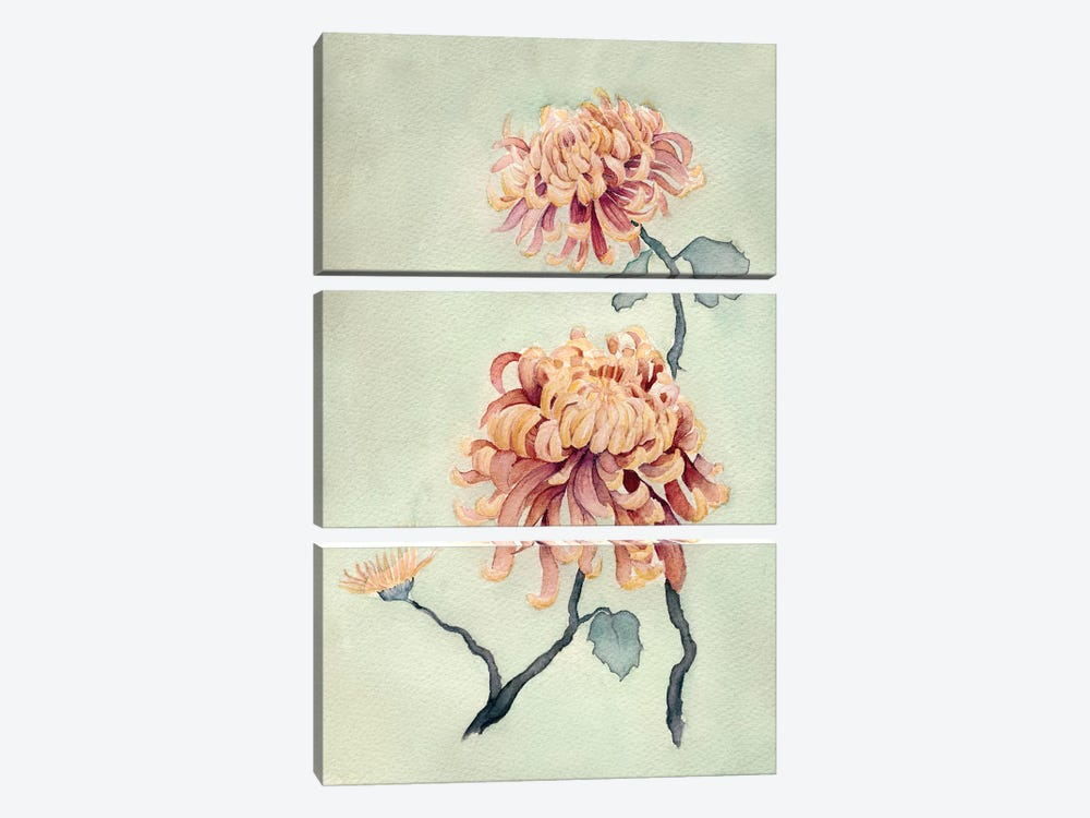 Chrysanthemum Beauty I by Natasha Chabot 3-piece Canvas Print
