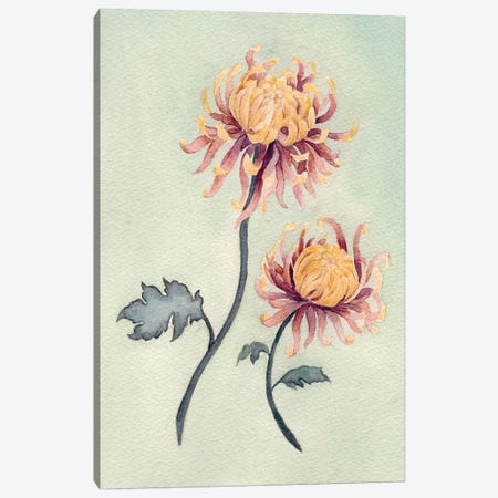 Chrysanthemum Beauty II Canvas Print #NCH2} by Natasha Chabot Canvas Print