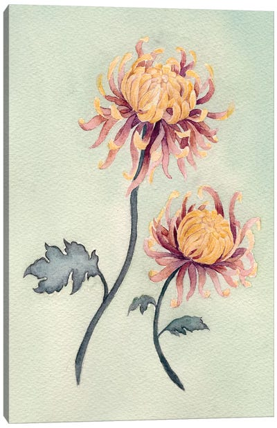 Chrysanthemum Beauty II Canvas Art Print