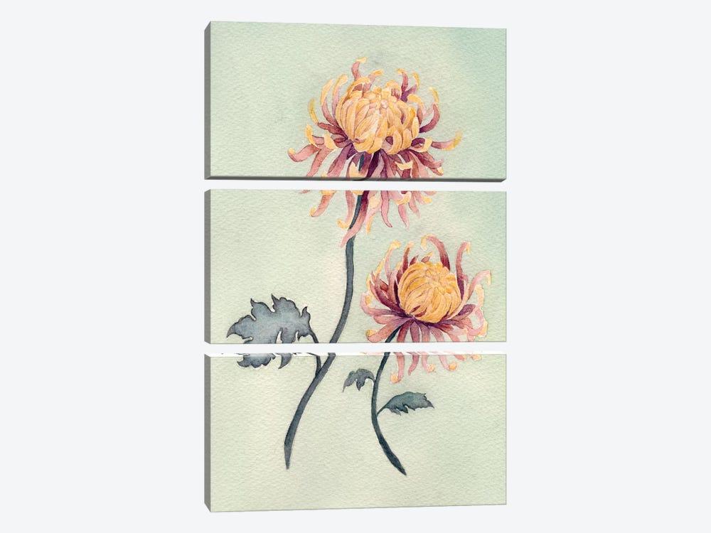 Chrysanthemum Beauty II by Natasha Chabot 3-piece Canvas Wall Art