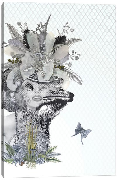 Animal Attraction Lana II Canvas Art Print