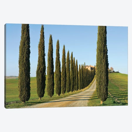 Cypress-lined Dirt Road, Siena Province, Val d'Orcia, Tuscany Region, Italy Canvas Print #NCO2} by Nico Tondini Canvas Art