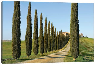 Cypress-lined Dirt Road, Siena Province, Val d'Orcia, Tuscany Region, Italy Canvas Art Print