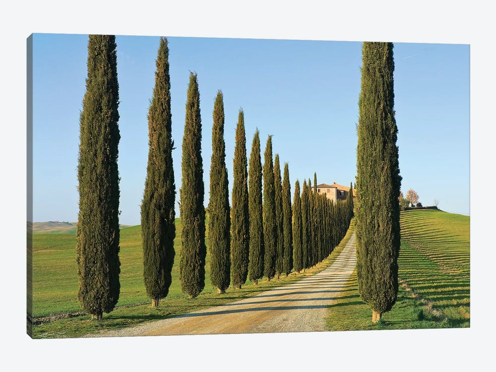 Cypress-lined Dirt Road, Siena Province, Val d'Orcia, Tuscany Region, Italy by Nico Tondini 1-piece Canvas Print