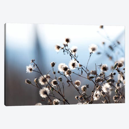 Spring Fluff Canvas Print #NCR15} by Nancy Crowell Canvas Art