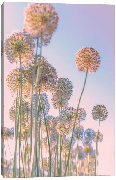 Daydreams Canvas Art Print