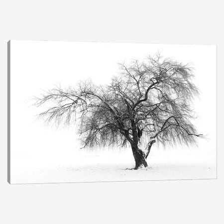Solutude Canvas Print #NCR23} by Nancy Crowell Canvas Wall Art