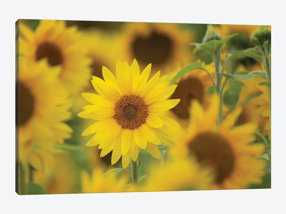 Standing Out by Nancy Crowell 1-piece Canvas Art Print