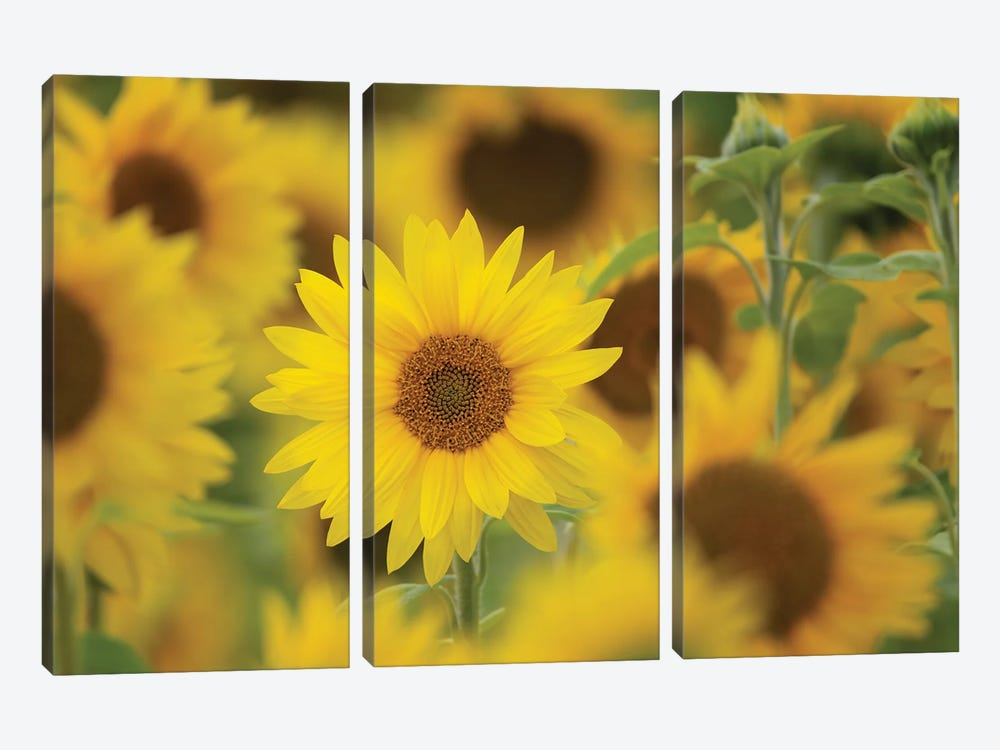 Standing Out by Nancy Crowell 3-piece Art Print