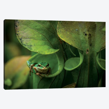 Arboreal Refuge Canvas Print #NCR2} by Nancy Crowell Canvas Wall Art