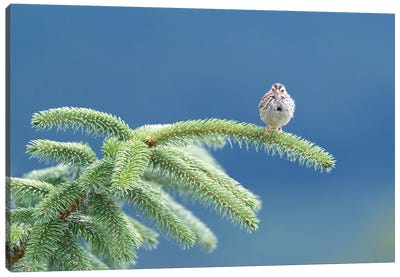 Evergreen Perch Canvas Art Print
