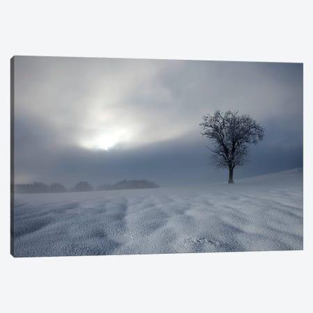 Winter Impression Canvas Print #NCS2} by Nicolas Schumacher Canvas Art Print