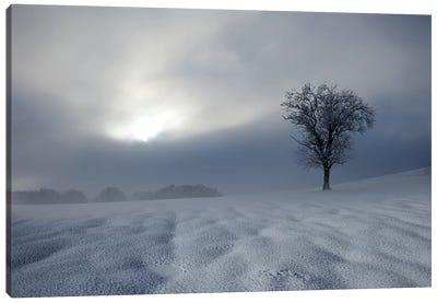 Winter Impression Canvas Art Print