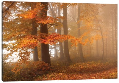 Edge Of The Woods Canvas Art Print
