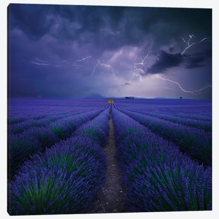 Wetter Im Lavendelfeld Canvas Print #NCS5} by Nicolas Schumacher Canvas Wall Art