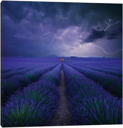 Wetter Im Lavendelfeld Canvas Art Print
